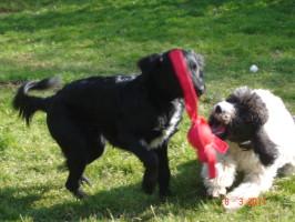 Tierpension Alte Mühle, Hunde Spielplatz
