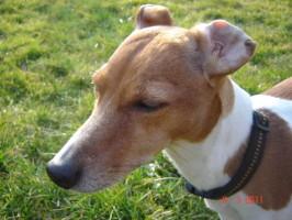 Tierpension Alte Mühle, Tagesbetreuung für Hunde